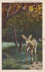 Deer Sportman's Paradise In Potter County Pennsylvania Curteich