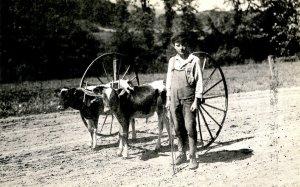 VT - Miniature Ox Team & Driver circa 1910  (Reproduction)