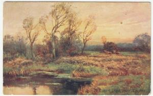 Essex; A Forest Pool Nr Epping PPC, 1905 PMK, To Miss Reeve, Leytonstone