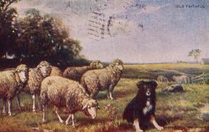 Antique Postcard c1907, Sheepdog Tending Sheep, Dog, Unidivided Back   E04