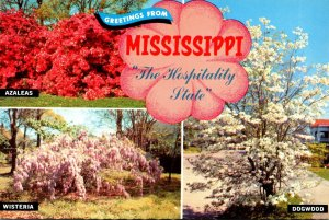Mississippi Greetings From The Hospitality State Showing Dogwood Wisteria and...