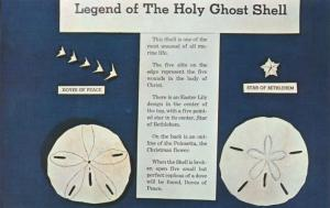 Legend of the Holy Ghost Shell - Mellita Testudinata