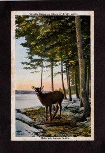 ME Winter Deer on Belgrade Lakes Maine Vintage Postcard Animals