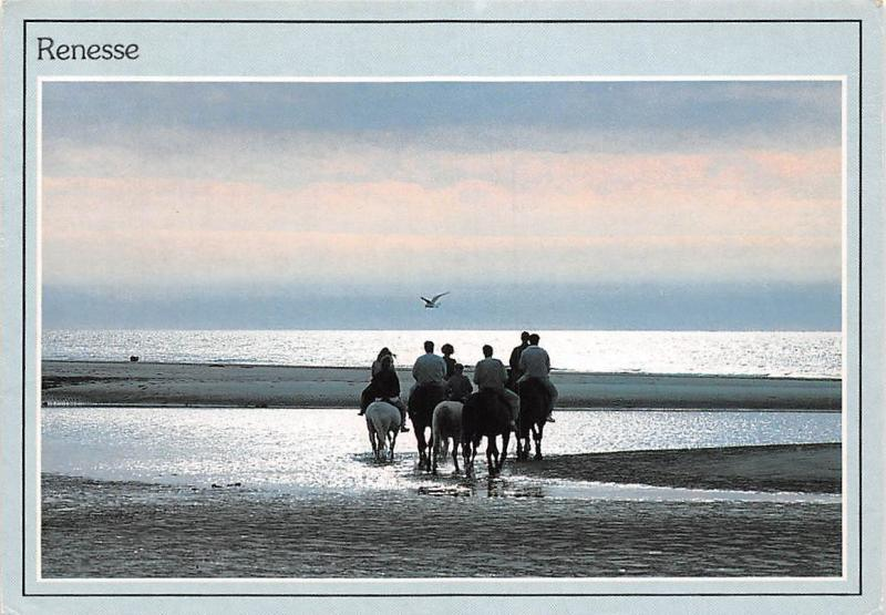 Netherlands Renesse Chevaux Horses Riding