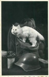 Photo postcard white cat & military helmet