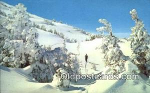 Skiing Winter Wonderland Postcard Post Card, Carte Postale, Cartolina Postale...