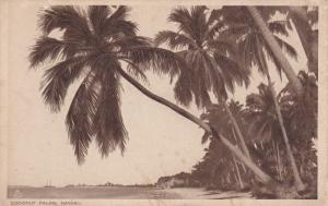 NASSAU, Bahamas; Coconut Palms, 00-10s