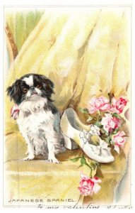 Dog , Japanese Spaniel