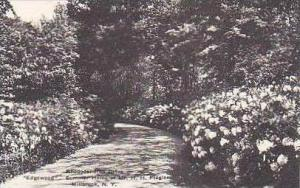 New York Millbrook Rhododendron Drive Edgewood Summer Home of Mr H H Flagler ...