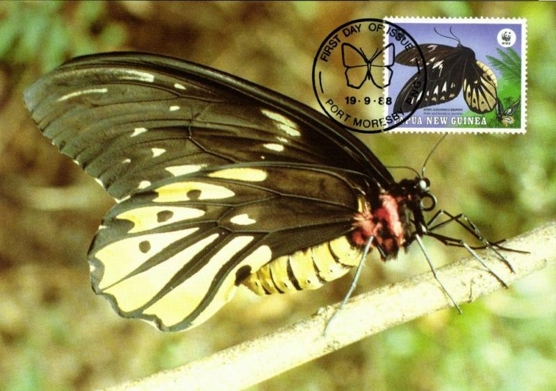 Papua New Guinea, Queen Alexandra's Birdwing Butterfly Postcard (1988)
