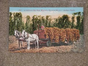A CALIFORNIA HOP FIELD, ROAD OF A THOUSAND WONDERS - SOUTHERN PACIFIC, UNUSED