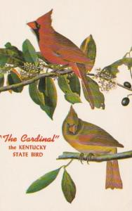 Kentucky State Bird The Cardinal