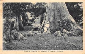Gabon Paysages d'Afrique, Un Geant de la Foret Gabonaise