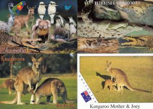 Crocodiles in Australia Wildlife Kangaroos 4x Australian Postcard s