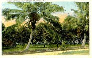FL - Fort Myers. First Street, Cocoanut Tree