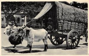 Sri Lanka, Ceylon, Colombo, Double Bullock Cart