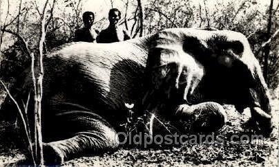 Elephant Tusk Unused very light corner wear, close to grade 1, Unused