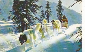 Alaska Dog Sled In The Arctic At 56 Below Zero
