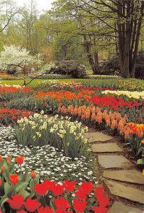 Netherlands Keukenhof Lisse Holland Blumen Flowers Garden