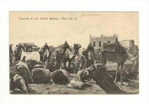 aravan of camels at rest ADEN, 00-10s