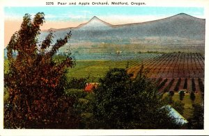 Oregon Medford Typical Pear and Apple Orchard