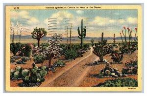 1946 Various Species Cactus Arizona Desert Standard View Linen Postcard