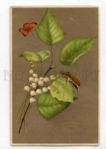 264877 MAY BEETLE Phyllophaga BUTTERFLY May-lily Vintage PC