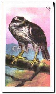 Image Entremets Francorusse Raptor Eagle Faucoun