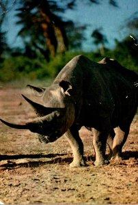 African Fauna The Rhinocerus