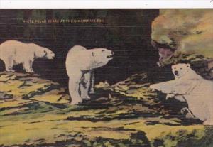Ohio Cincinnati White Polar Bears Zoological Gardens Kraemer Art