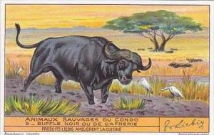 Liebig Trade Card S1349 Animals Of The Congo No 5 Water Buffalo