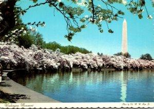 Washington D C Washington Monument & Cherry Blossoms