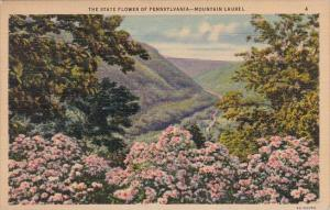 The State Flower Of Pennsylvania Harrisburg Pennsylvania 1937