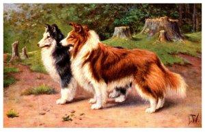 Dog , Collie pair