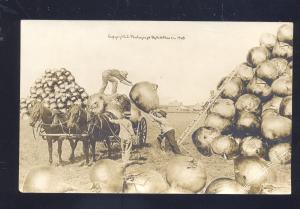 RPPC WH MARTIN EXAGGERATION HORSE DRAWN ONION FARMING REAL PHOTO POSTCARD