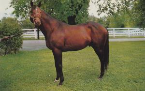 Nashua Thoroughbred Horse Postcard Vintage