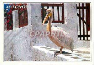 Modern Postcard Mykonos Greece Pelican