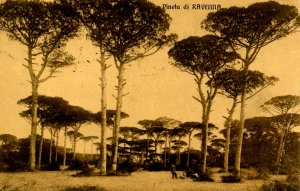 Italy - Ravenna. Pine Forest     (crease)