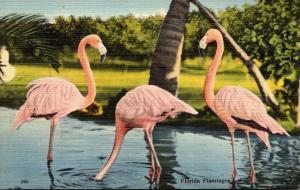 Birds Flamingos At Rare Bird Farm Miami Florida