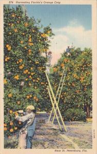 Florida Saint Petersburg Harvesting Florida's Orange Crop