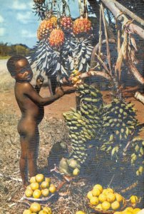 Postcard, Africa In Pictures, Child with Fruits, Black Children 49Z