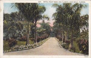 Florida Royal Palm Trees And Flower Lined Walk Florida 1926