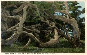 CA - Del Monte. Rams Horn Cypress