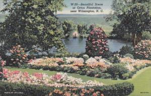 North Carolina Wilmington Beautiful Scene At Orton Plantation