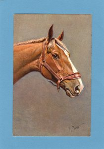 Horse Head Full Color Postcard Portrait Signed By Artist I. Rivst