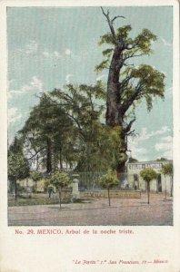 Arbol de la noche triste  , Mexico , 1901-07