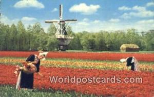 Holland Netherlands, Nederland Bloemenland, Molenland  Bloemenland, Molenland
