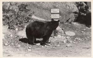 Cat Tenaya Lake Trail California Sign Animal Real Photo Postcard