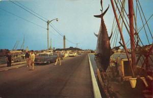 9517  MA Provincetown    Blue Fin  Tuna Hung on Fishing Boat