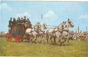 The Show Ring. Horses  Nice vintage English postcard